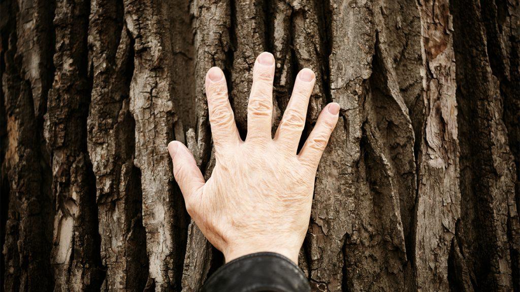 Holzheizung als regenerative Heizmethode