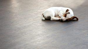 Eine Flächenheizung oder eine Fußbodenheizung sorgen für Wohlfühlklima in Ihren Räumlichkeiten.